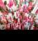 3-0324 Gaiša maxi kleita ar ziediem